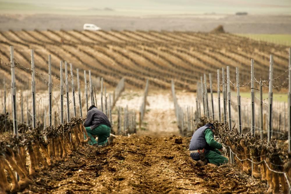 big data en viticultura