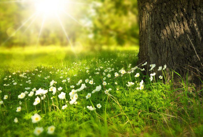 Verano, una época para desconectar