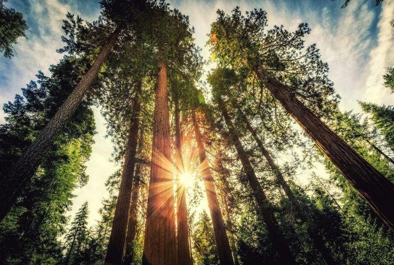 La digitalización del sector forestal y la industria maderera comienza en los bosques.