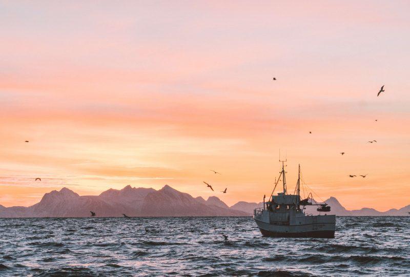 El IoT tiene aplicaciones en el sector pesquero, desde la producción de las embarcaciones hasta la distribución del pescado.