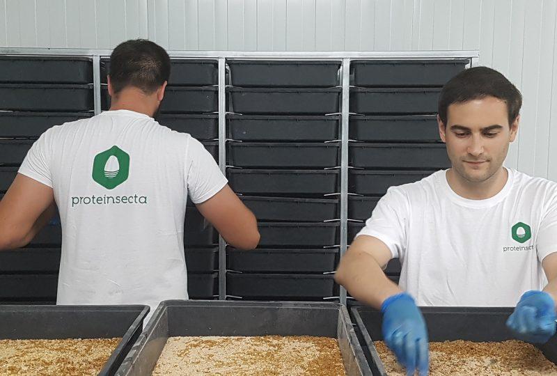 una de las granjas de proteinsecta